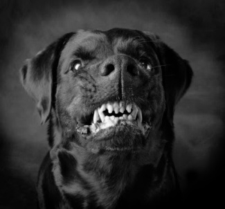 9373b-black_dog_4